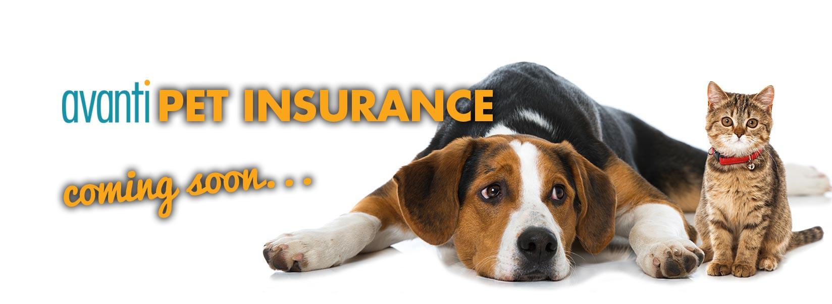 Pet Insurance coming soon