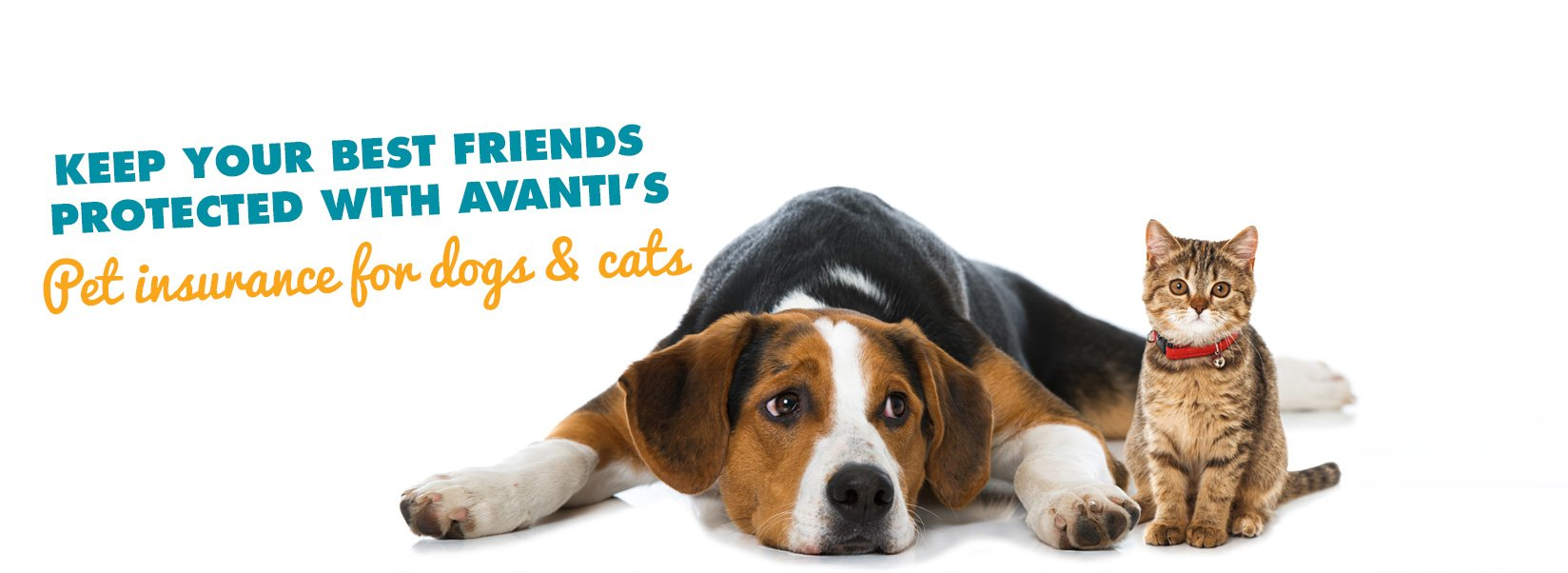 Keep your best friends protected with Avanti's pet insurance for dogs & cats