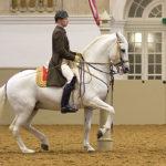image-of-lipizzan-stallions