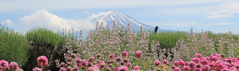 Image of Mount Fuji landscape