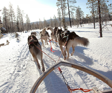 Dog sledging in the snow in Finland – a fun activity to do in the winter