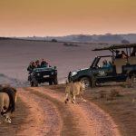 tourists on a wildlife safari conservation