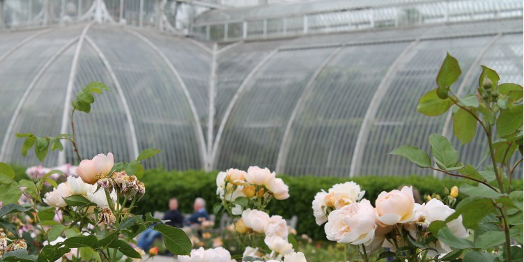 an image of blossoming flowers outside the Palm House in Kew Gardens, London